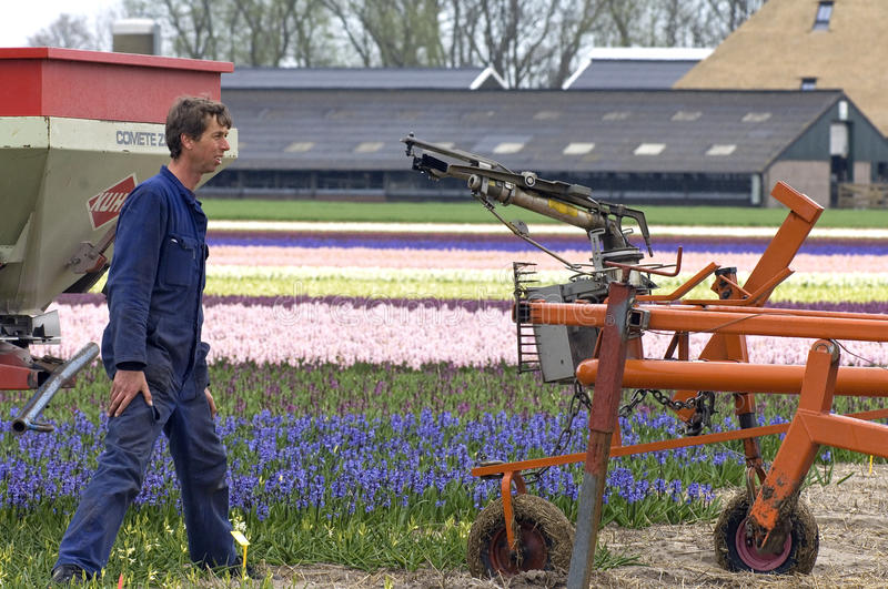 Working bulb grower in bulb field, Netherlands. Netherlands, North Holland province, village Anna Paulowna. One of the attractions of the bulb area, Kennemerland stock images