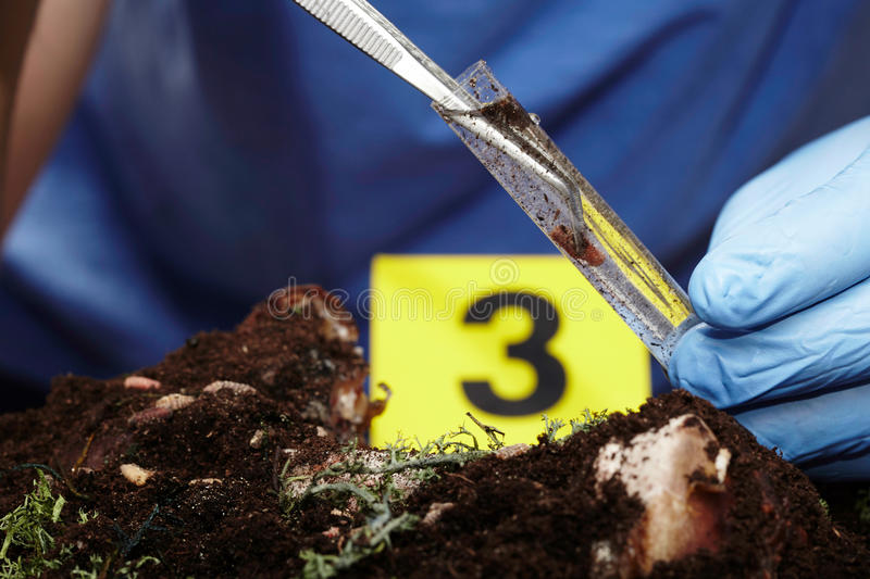 Working on collecting of fly pupa on crime scene stock images