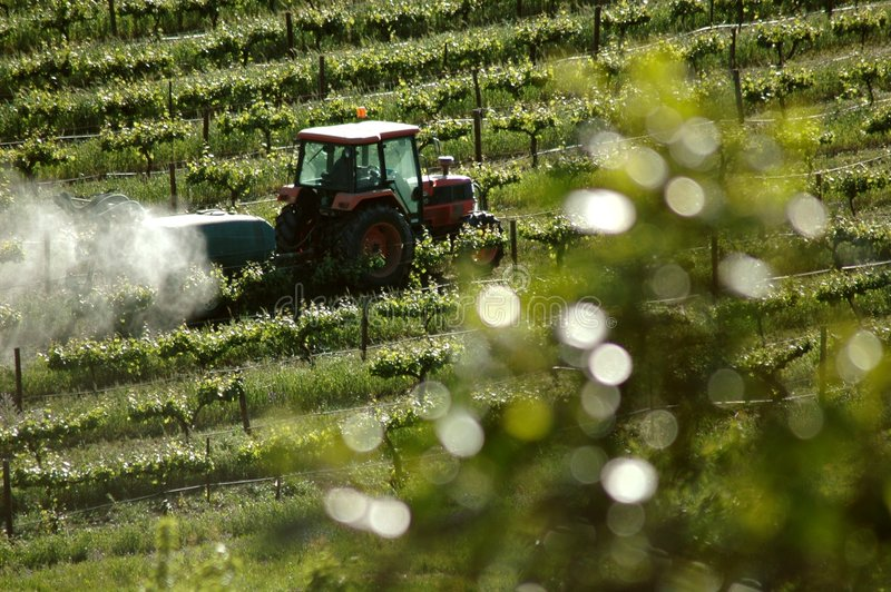 Spraying in Vineyards. A tractor at work spraying the vines in a vineyard stock photo
