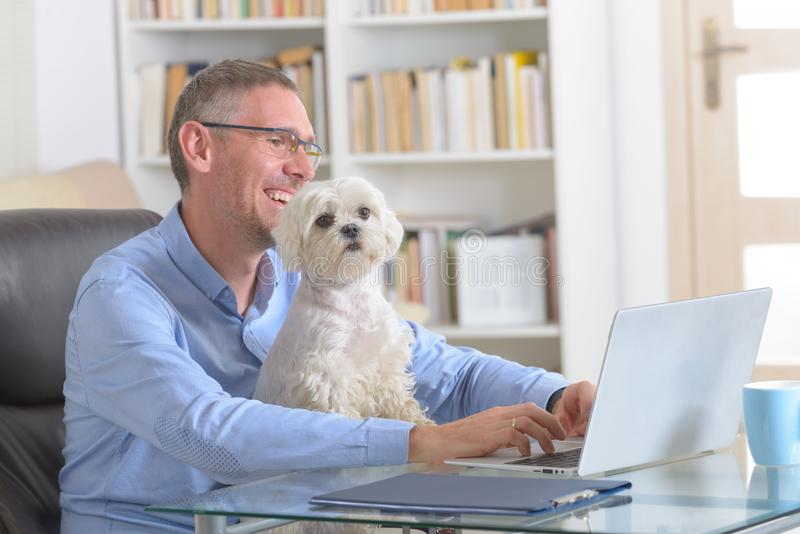 Working with dog at home or office. Man working at home or office and holding his liitle dog royalty free stock photo