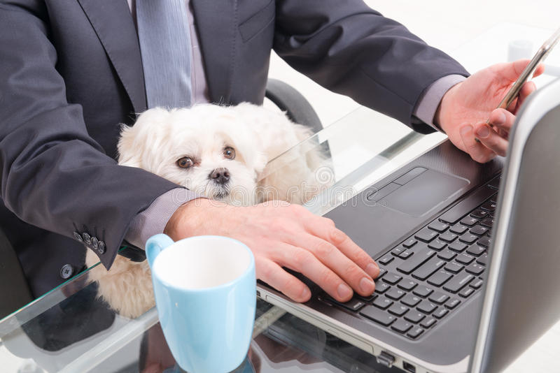 Working with dog in the office. Man working in the office and holding his liitle dog stock photography