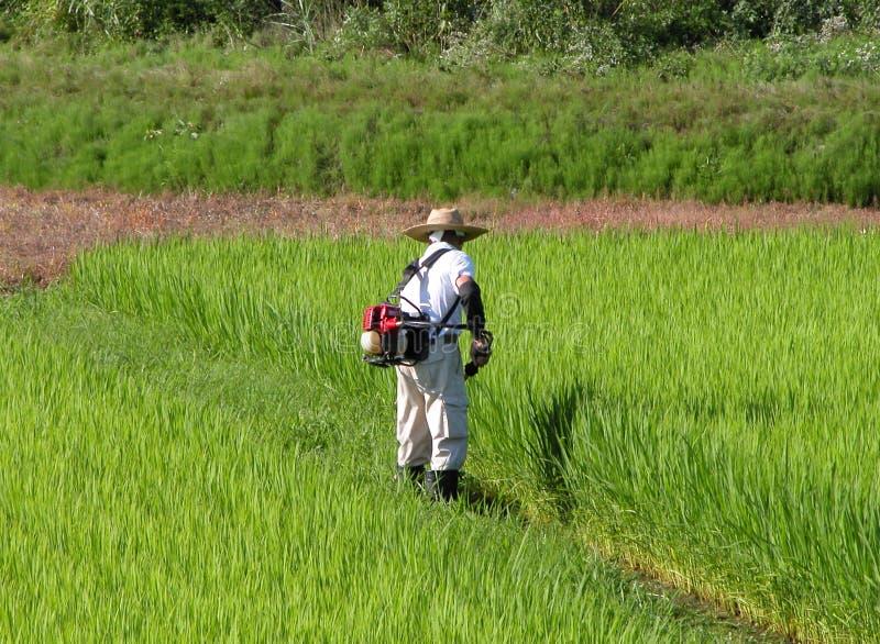 Download Working för fältmanrice fotografering för bildbyråer. Bild av rice - 506187