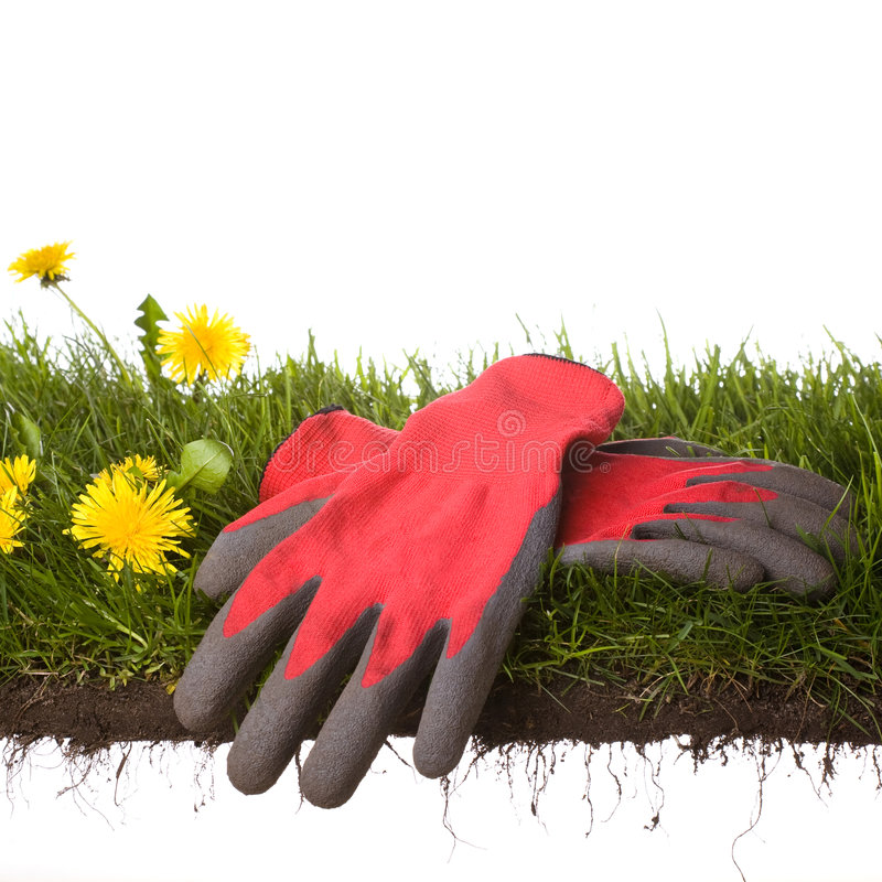 Download Working in the garden stock photo. Image of growth, environment - 4967532