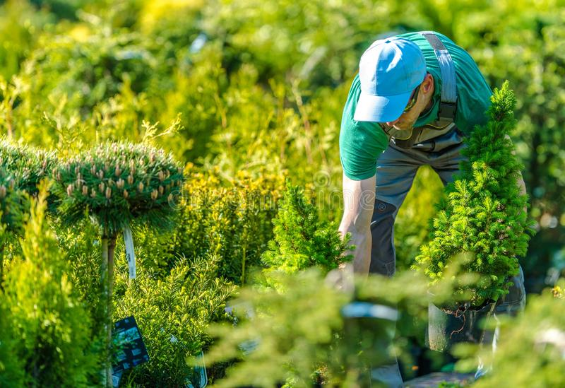 Working in a Garden Store royalty free stock images