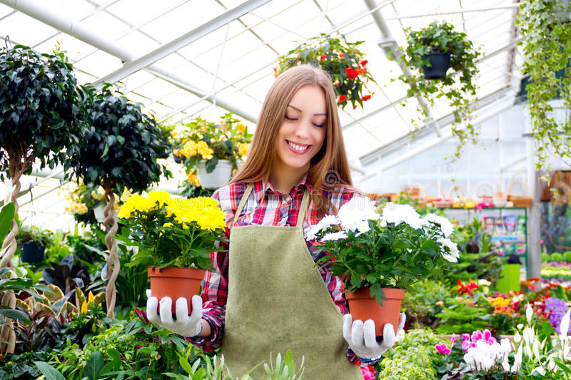 Working in the greenhouse royalty free stock image