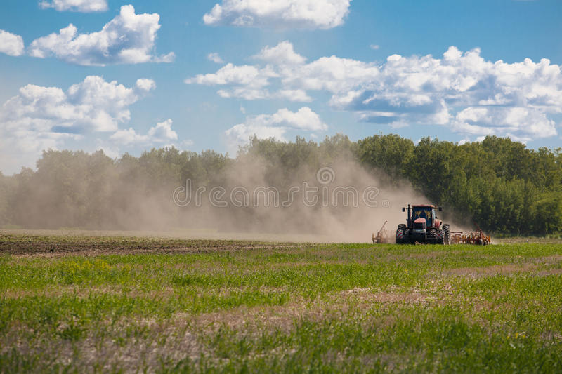 Working Harvesting Combine in the Field of Wheat.  stock photos