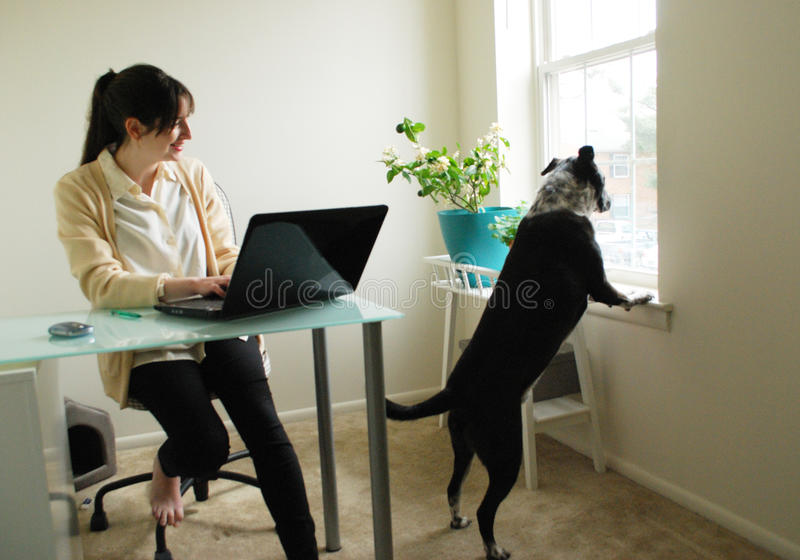 Woman distracted working from home laptop. Young woman being distracted while trying to do office work on laptop at home stock photos
