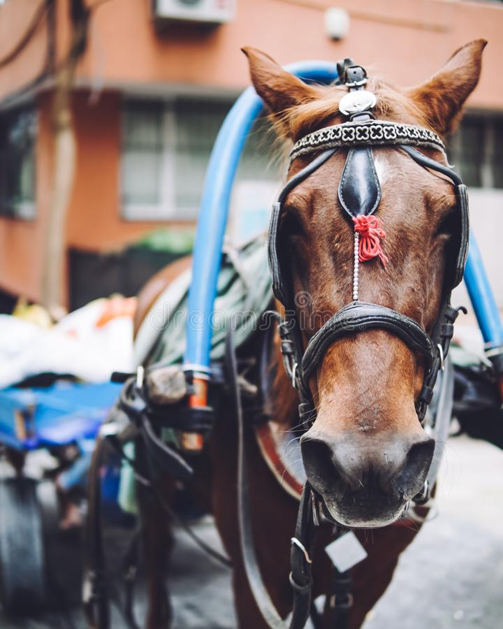 Working horse in Istanbul stock image
