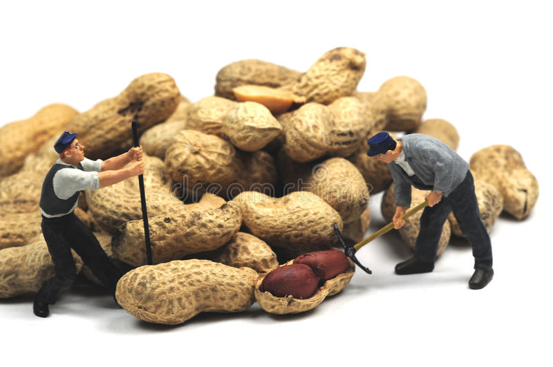 Working for peanuts. A couple of workmen working for low salaries royalty free stock photo