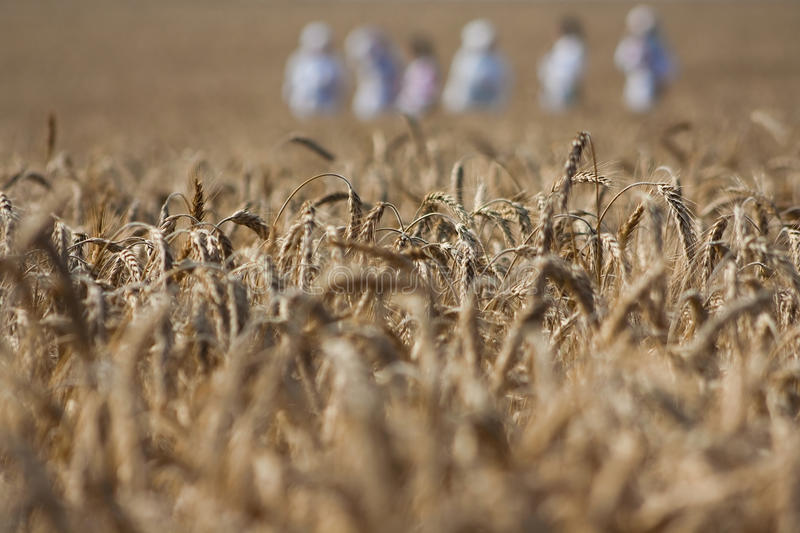 Download Working People In The Field Stock Image - Image: 15503441