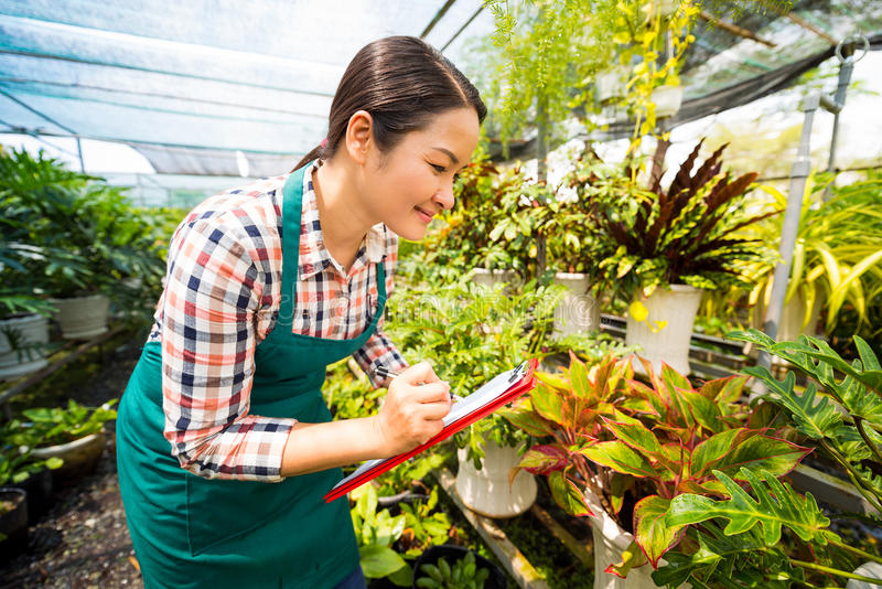 Working in plant nursery royalty free stock images