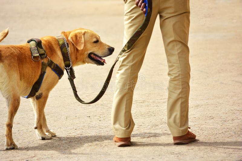 Working police dog. Working Indian police and dog stock photo