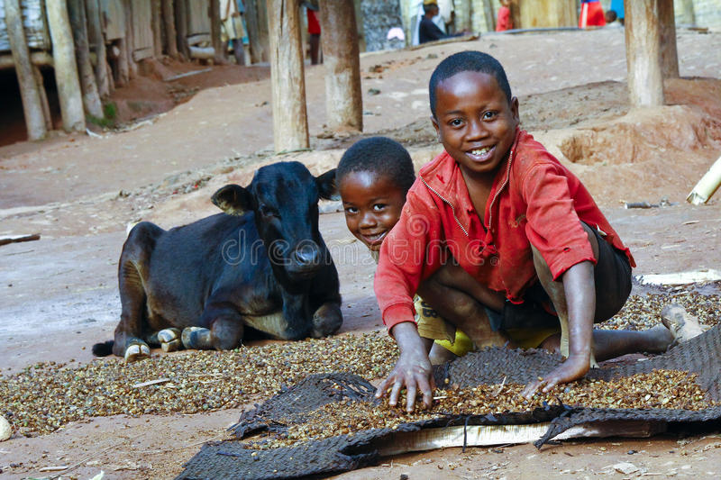 Working poor african children and cow royalty free stock images