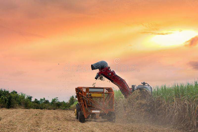 Working sugar cane cutting machine in farm. Sunset in and evening sky with working sugar cane harvester in big farm stock image