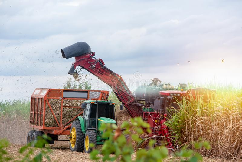 Working sugar cane cutting machine with sunset time royalty free stock image