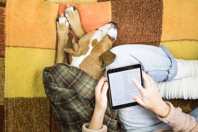 Working with tablet at home next to a sleeping dog royalty free stock photography