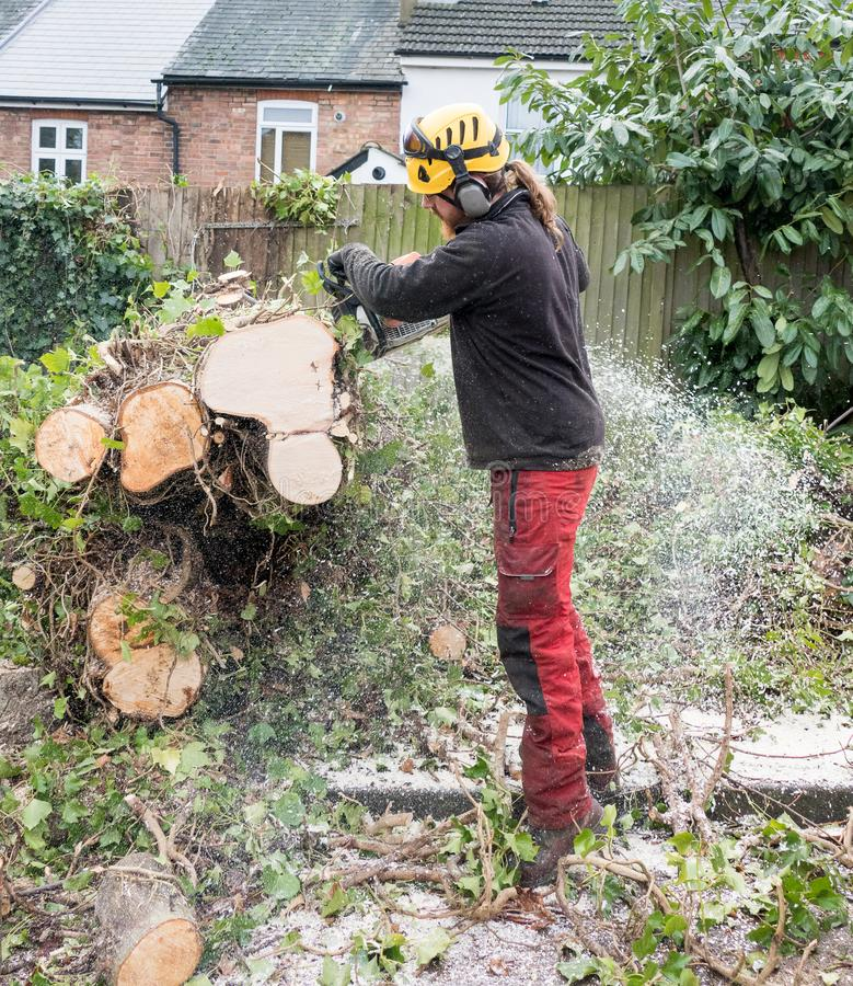 Working Tree Surgeon using chainsaw stock images