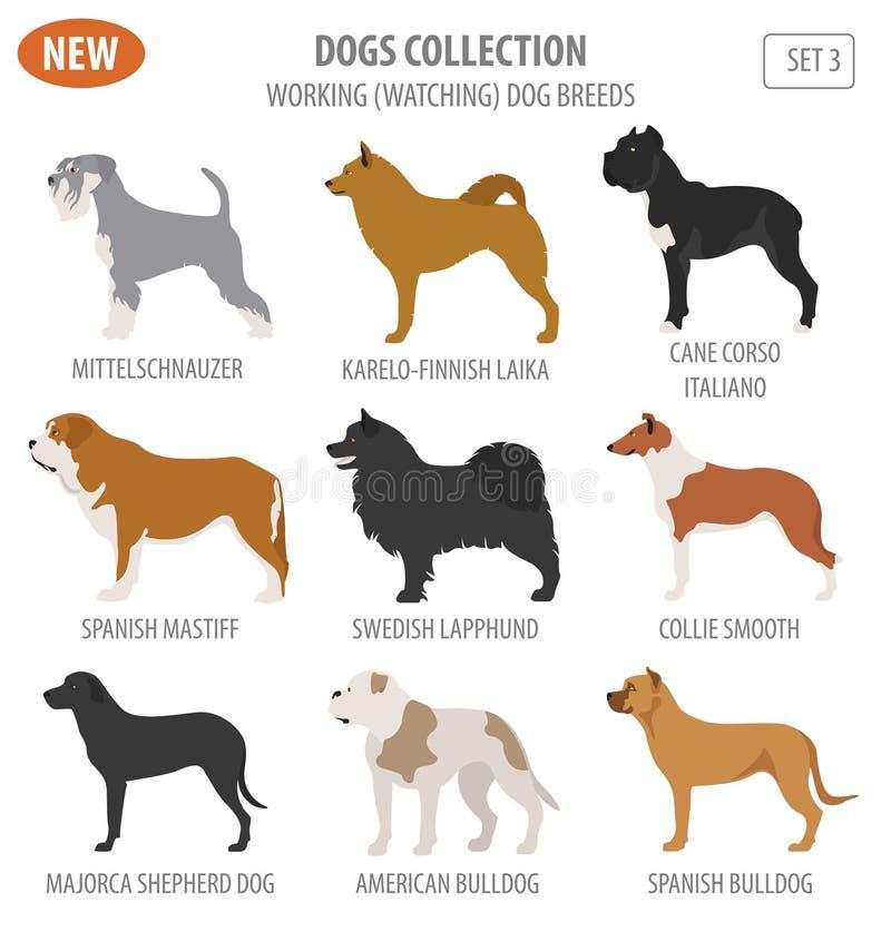 Free Working, Watching Dog Breeds, Set Icon Isolated On White . Flat Stock Photos - 90781353