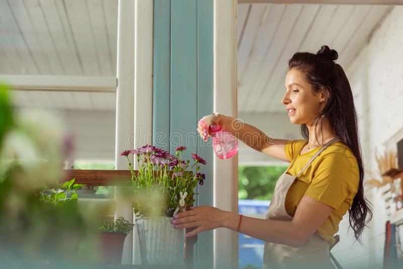 Concentrated woman sprinkling plants outside her flower shop. stock images