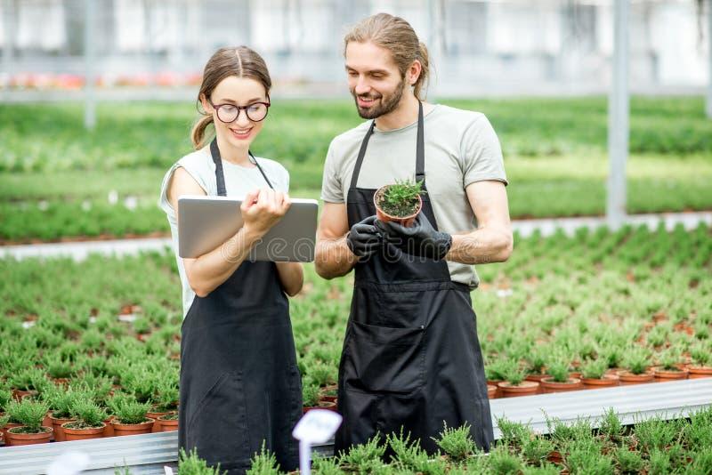 Workkers con la tableta digital en el invernadero imagenes de archivo