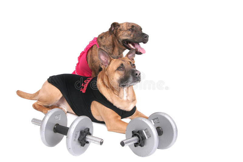Workout dogs stock images