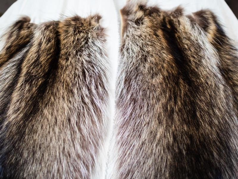 Fur pelts stitched to the textile layout close up. Workshop of manufacturing of coats from raccoon fur - fur pelts stitched to the textile layout close up royalty free stock image