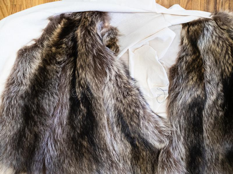 Fur pelts on textile coat layout on table. Workshop of manufacturing of coats from raccoon fur - fur pelts on textile coat layout on table stock photos