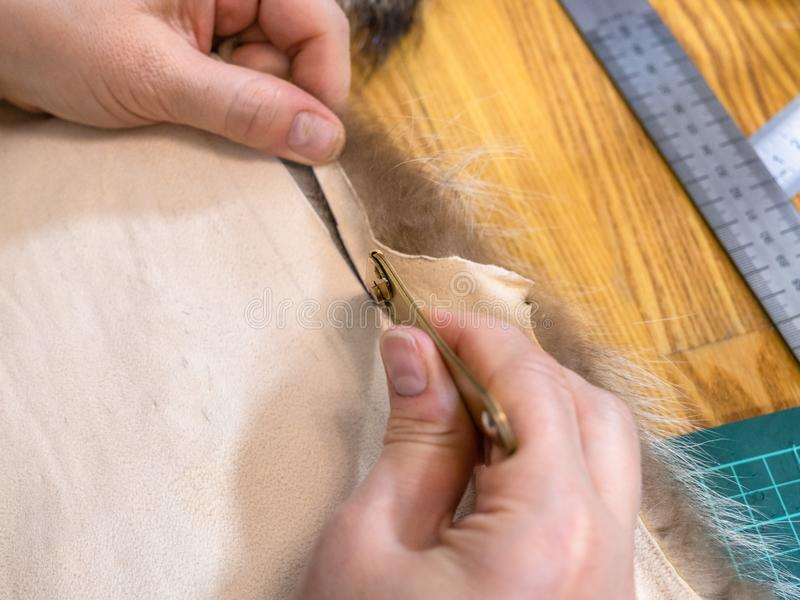 Top view of furrier cuts the fur pelt by knife. Workshop of manufacturing of coats from raccoon fur - top view of furrier cuts the edge of fur pelt by knife royalty free stock images