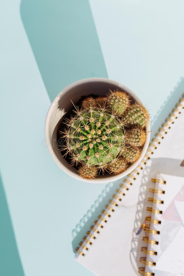 Workspace desk with notebook pencil and cactus on soft blue background royalty free stock image