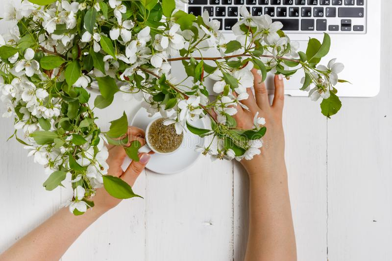 Workspace with girl`s hand on laptop keyboard and cup of coffee, white spring apple tree flowers on white woodden background. Vie stock photos