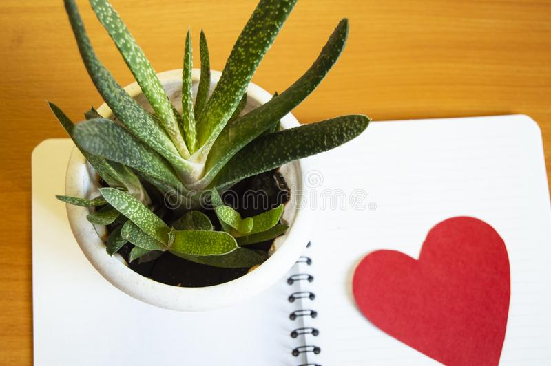 Workspaceskrivbord, kontorstillförsel och kaktussuckulenter med HJÄRTA med kopieringsutrymmemallen för kvinnors blogg, minsta sti royaltyfria foton