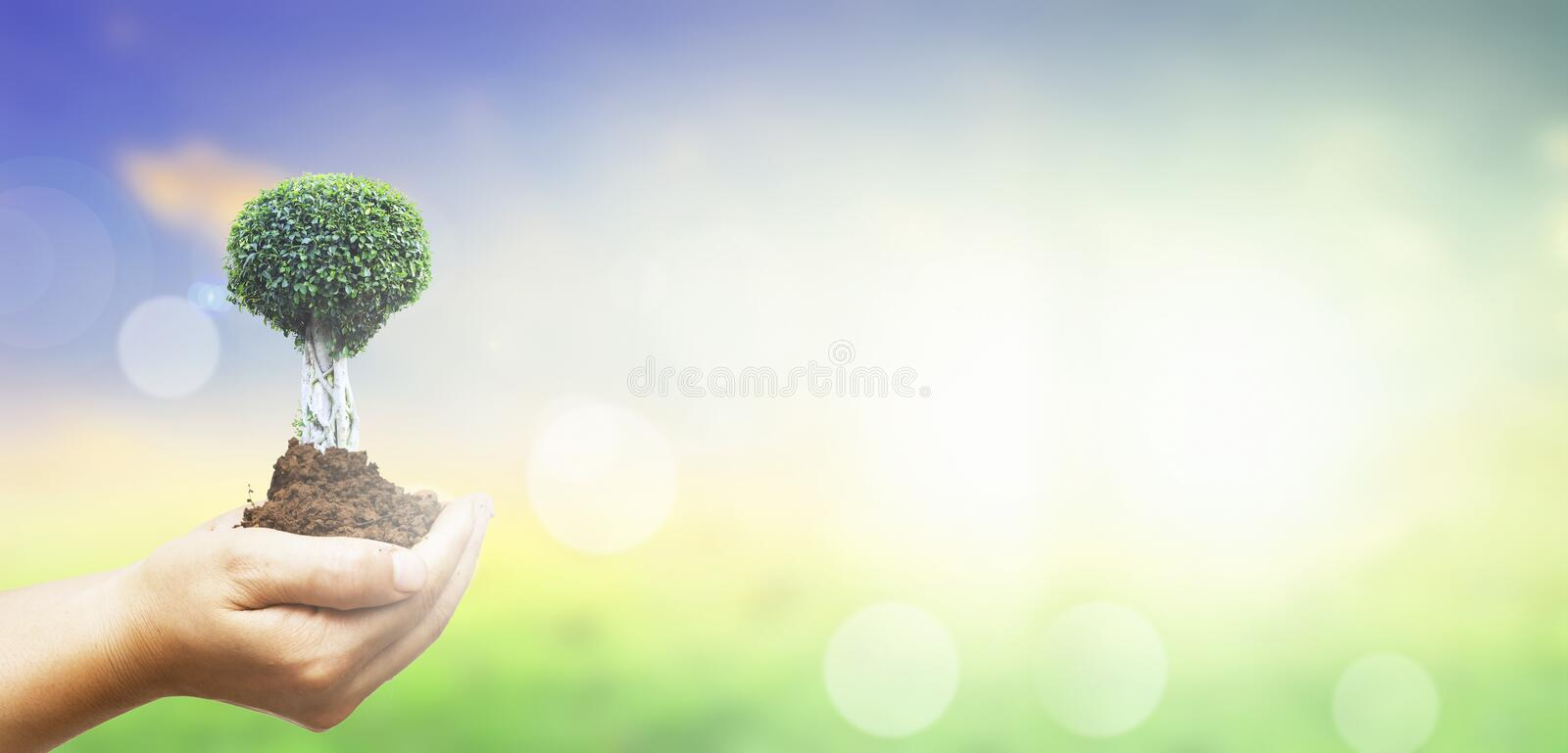 World environment day concept: Human hands holding big tree over green forest background royalty free stock photo