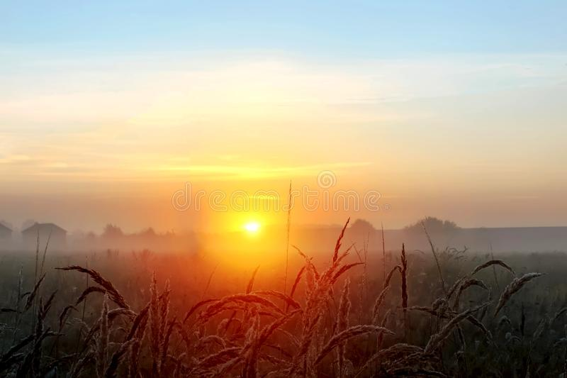 World environment day concept: Calm of country meadow sunrise landscape background. Field, nature, sunset, summer, yellow, beautiful, rural, autumn, sky stock images