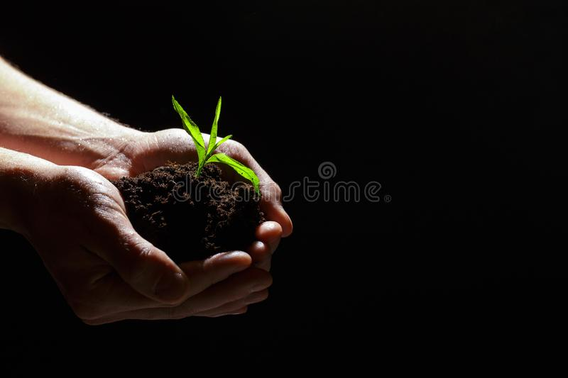 World environment day concept:The mans hand holding a small tree. Two hands holding a light green tree. holding seedlings isolate. World environment day concept stock photo