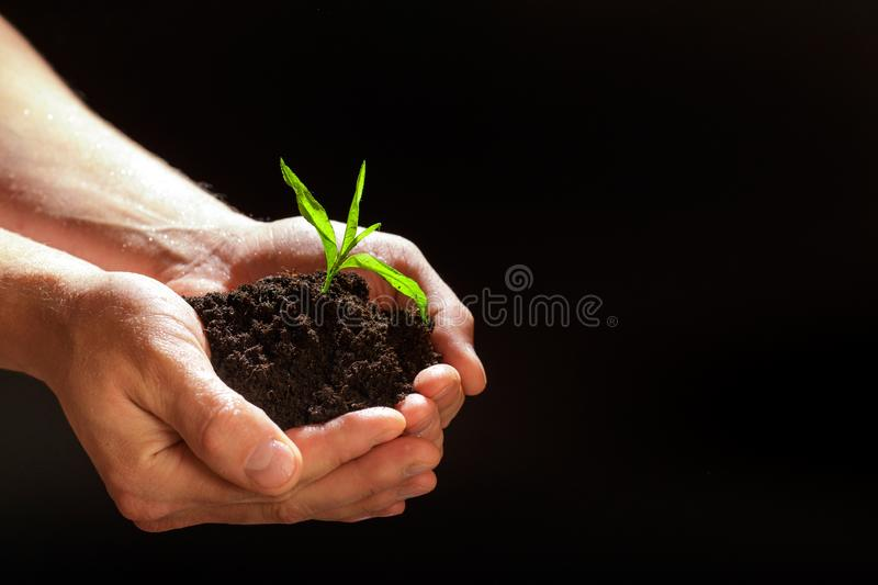 World environment day concept:The mans hand holding a small tree. Two hands holding a light green tree. holding seedlings isolate. World environment day concept royalty free stock images