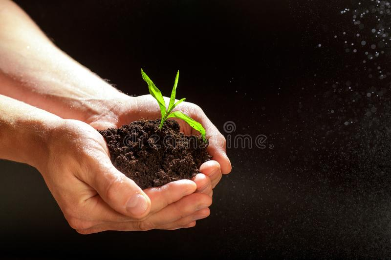 World environment day concept:The mans hand holding a small tree. Two hands holding a light green tree. holding seedlings isolate. World environment day concept royalty free stock photo