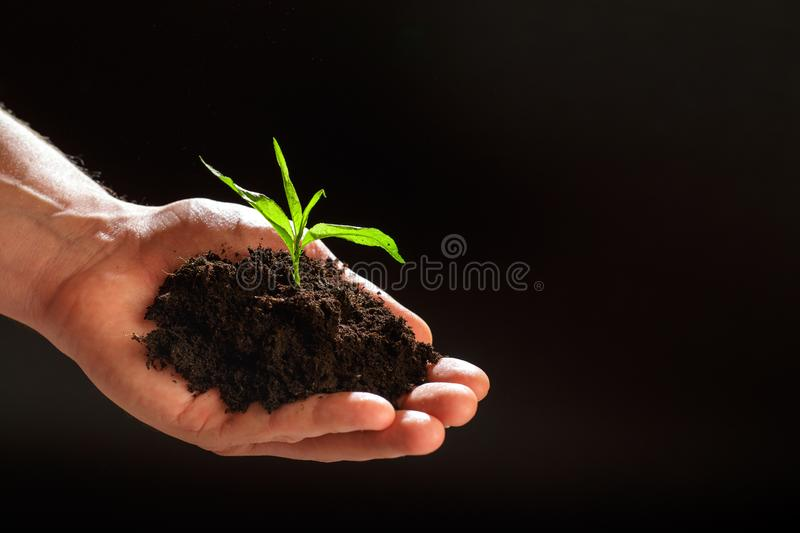 World environment day concept:The mans hand holding a small tree. Two hands holding a light green tree. holding seedlings isolate. World environment day concept stock image