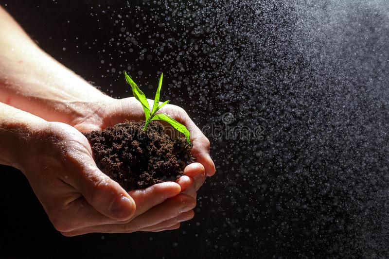 World environment day concept:The mans hand holding a small tree. Two hands holding a light green tree. holding seedlings isolate. World environment day concept stock photography