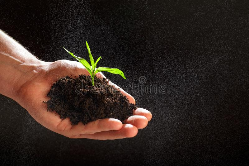 World environment day concept:The mans hand holding a small tree. Two hands holding a light green tree. holding seedlings isolate. World environment day concept stock images