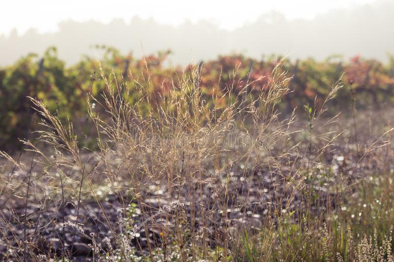 World environment day concept: Rural landscape at morning.  stock images