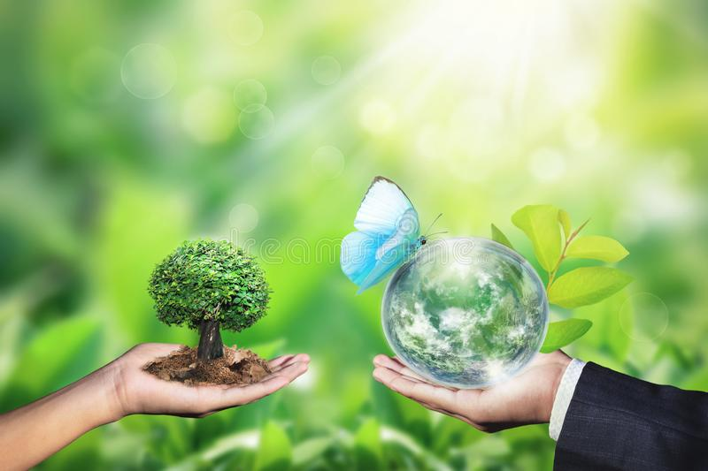 World environment day concept with tree planting and green earth on volunteering hands stock images