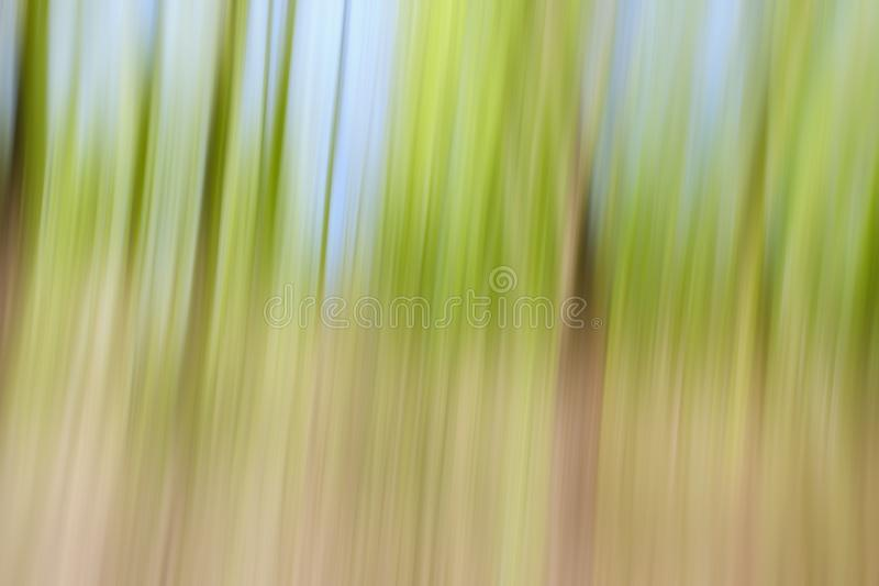 World environment green tree day concept. Abstract blurred trees texture sunset background stock images