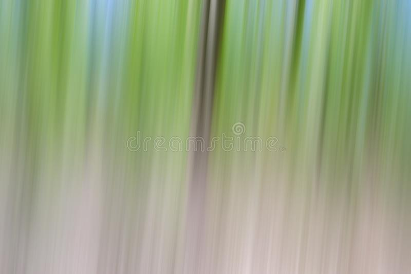 World environment green tree day concept. Abstract blurred trees texture sunset background royalty free stock images