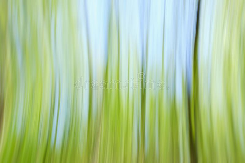 World environment green tree day concept. Abstract blurred trees texture sunset background stock photography