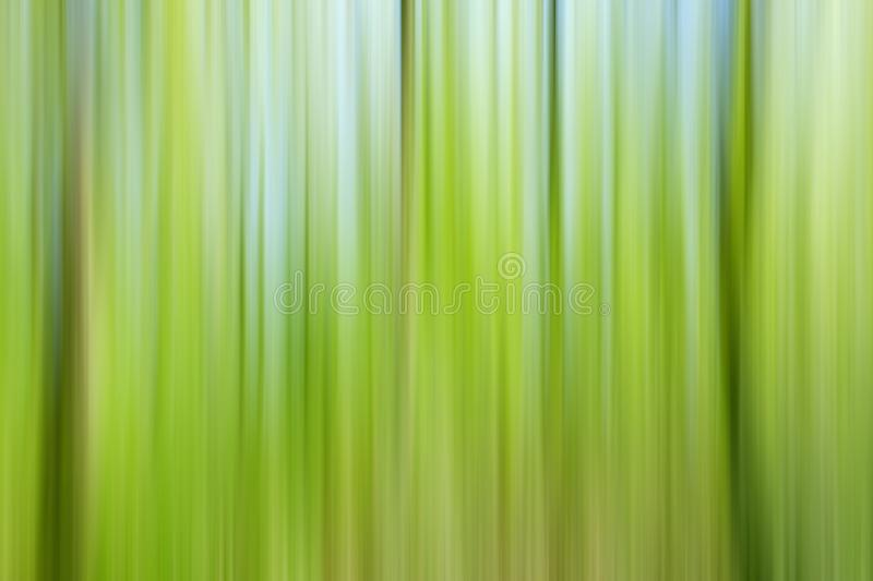 World environment green tree day concept. Abstract blurred trees texture sunset background stock photo