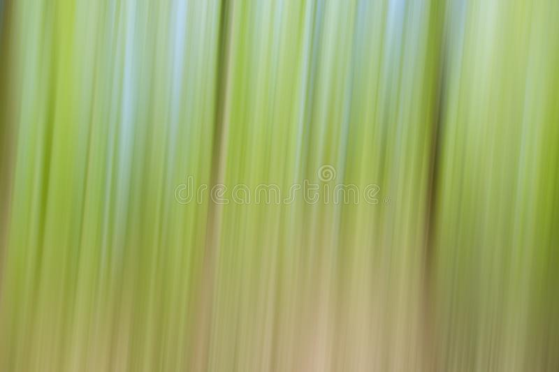World environment green tree day concept. Abstract blurred trees texture sunset background stock photos