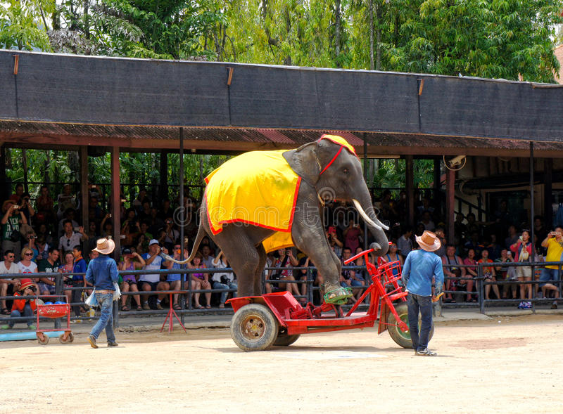 World famous elephant show in Nong Nooch tropical garden in Pattaya, Thailand. stock photo