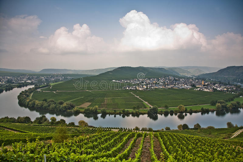World famous sinuosity at the river Mosel near Trittenheim. With vineyards at the edge royalty free stock image