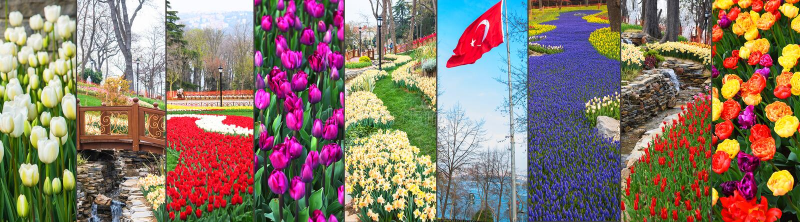 World famous Tulip Festival in Emirgan Park, Istanbul, Turkey. Flowering of tulips. Big collage royalty free stock image
