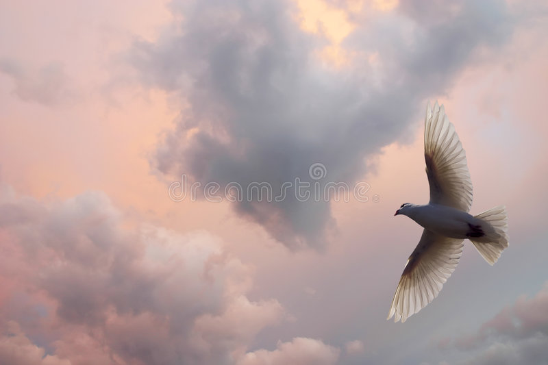 Download World Peace stock image. Image of bird, white, seek, symbol - 3133963